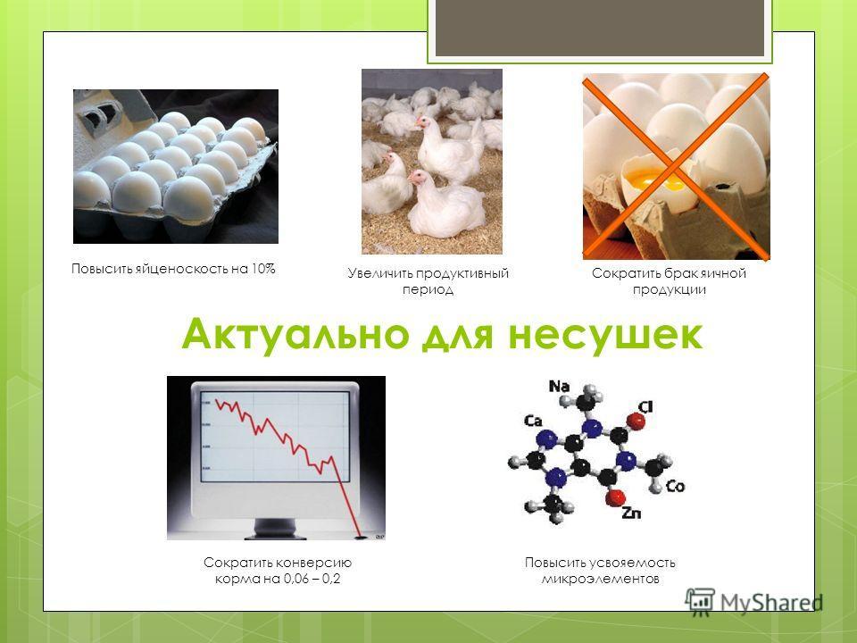 Актуально для несушек Повысить яйценоскость на 10% Увеличить продуктивный период Сократить брак яичной продукции Повысить усвояемость микроэлементов Сократить конверсию корма на 0,06 – 0,2