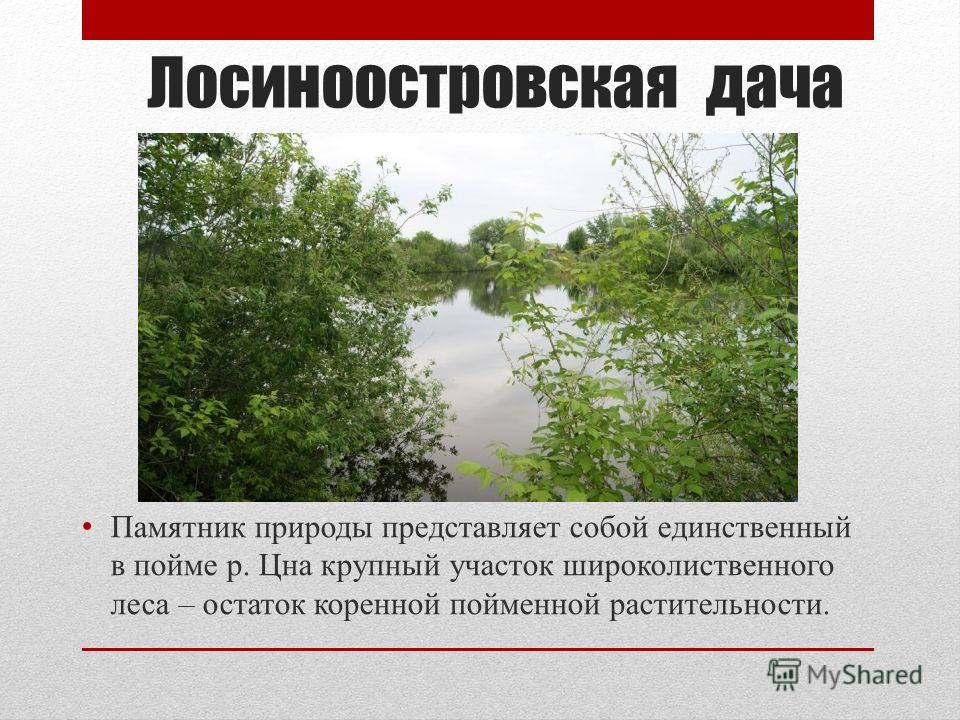 Лосиноостровская дача Памятник природы представляет собой единственный в пойме р. Цна крупный участок широколиственного леса – остаток коренной пойменной растительности.