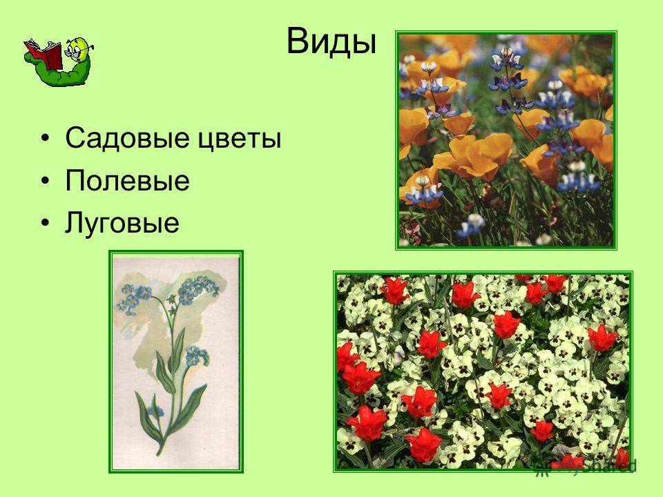 Виды Садовые цветы Полевые Луговые