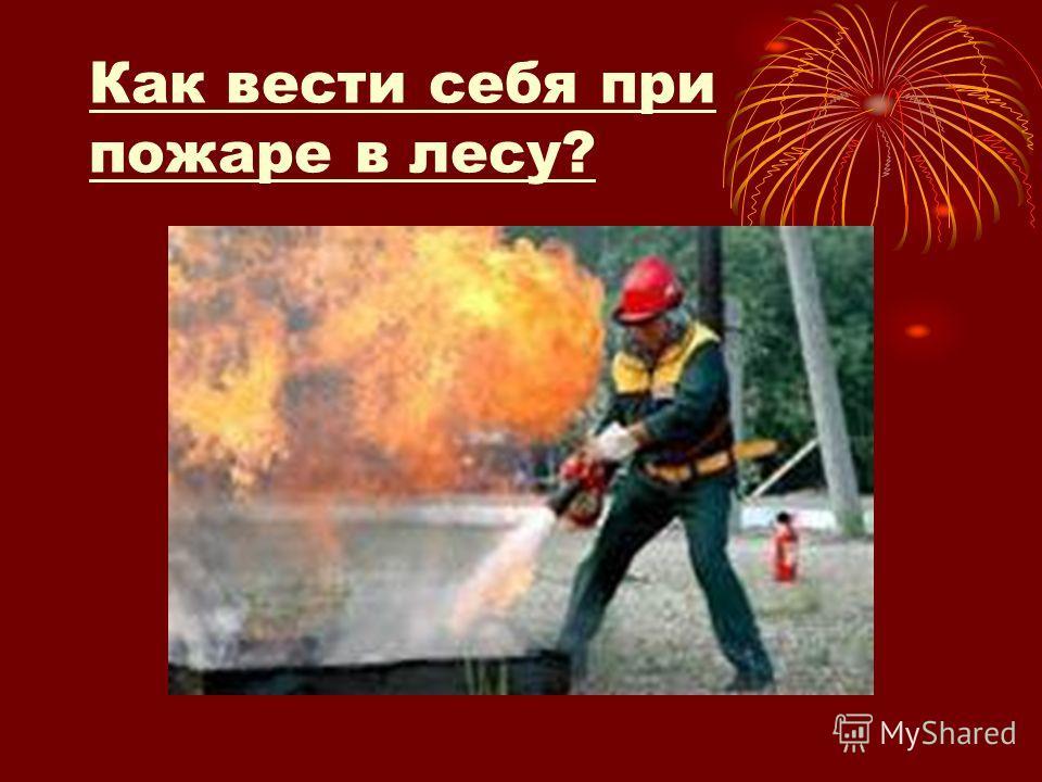 Как вести себя при пожаре в лесу?