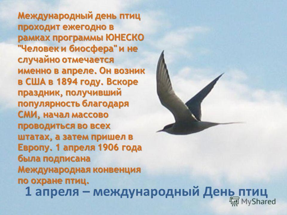 Международный день птиц проходит ежегодно в рамках программы ЮНЕСКО