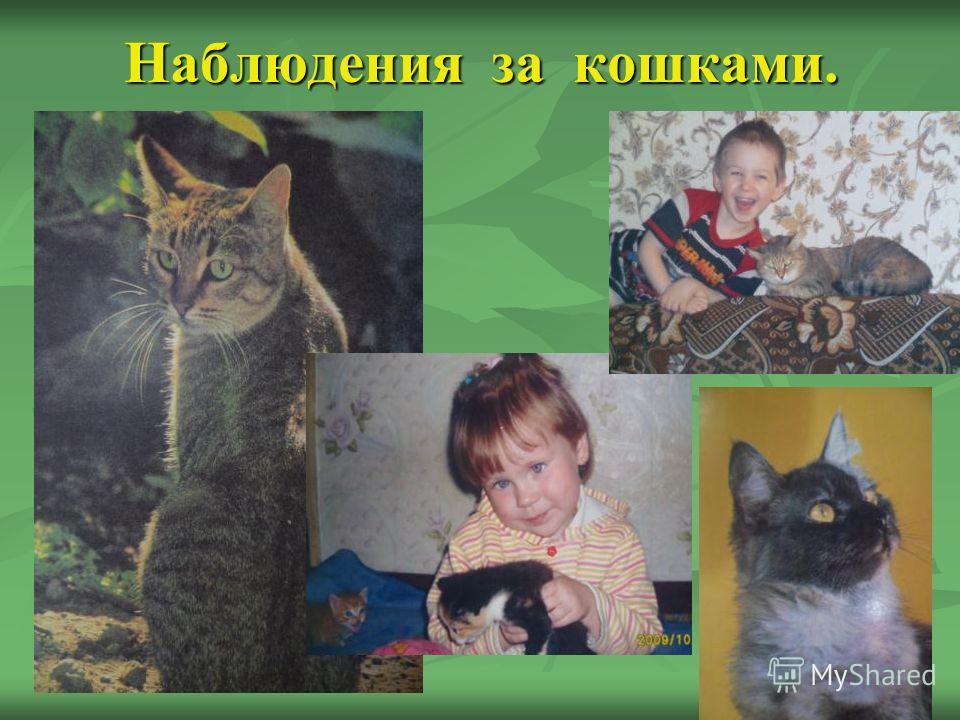 Наблюдения за кошками.