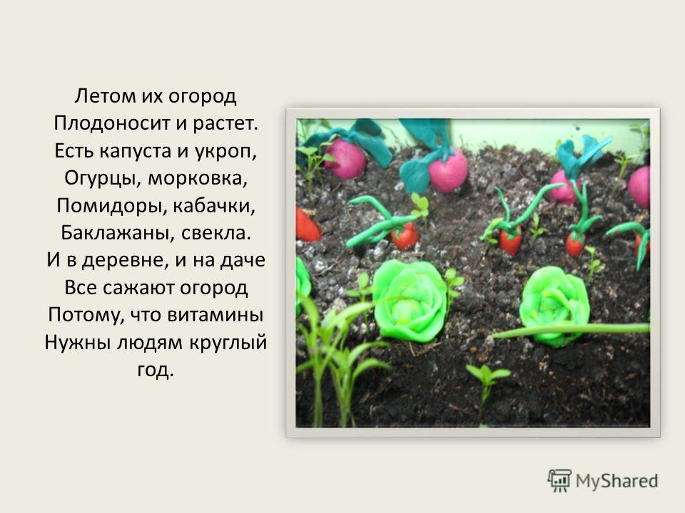 Летом их огород Плодоносит и растет. Есть капуста и укроп, Огурцы, морковка, Помидоры, кабачки, Баклажаны, свекла. И в деревне, и на даче Все сажают огород Потому, что витамины Нужны людям круглый год.