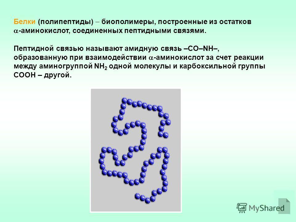 Белки (полипептиды) биополимеры, построенные из остатков -аминокислот, соединенных пептидными связями. Пептидной связью называют амидную связь –CO–NH–, образованную при взаимодействии -аминокислот за счет реакции между аминогруппой NH 2 одной молекул