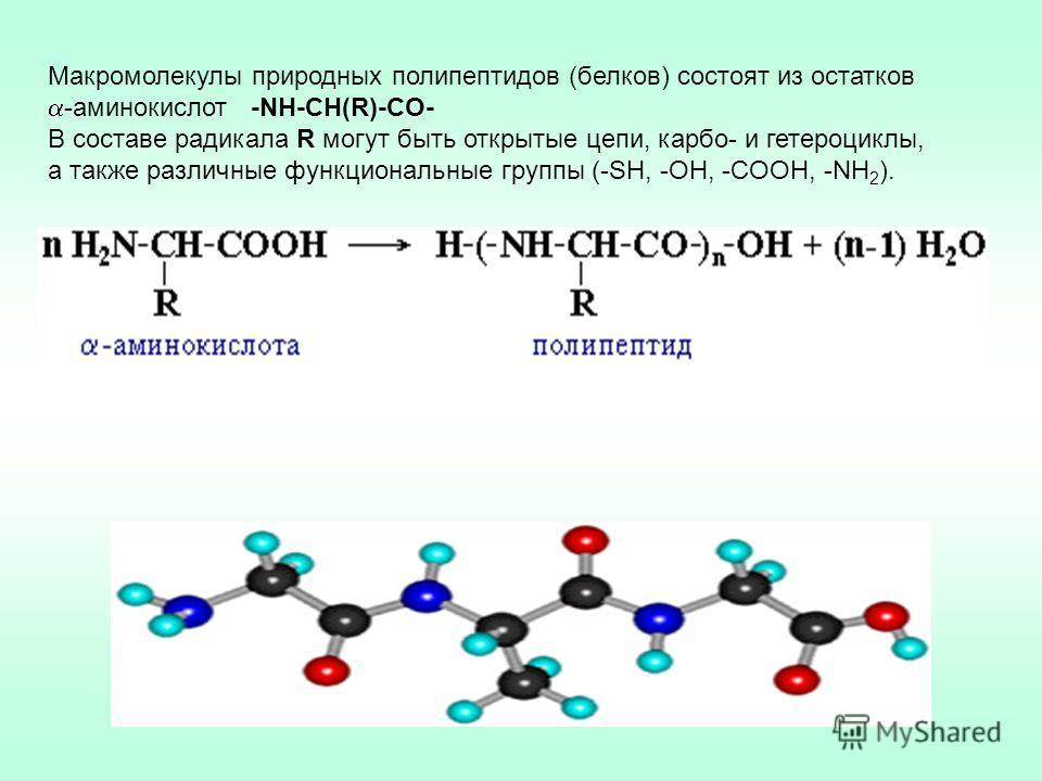 Макромолекулы природных полипептидов (белков) состоят из остатков -аминокислот -NH-CН(R)-СO- В составе радикала R могут быть открытые цепи, карбо- и гетероциклы, а также различные функциональные группы (-SH, -OH, -COOH, -NH 2 ).