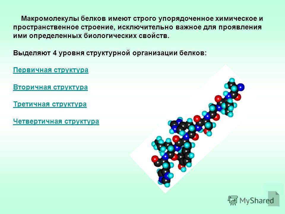 Макромолекулы белков имеют строго упорядоченное химическое и пространственное строение, исключительно важное для проявления ими определенных биологических свойств. Выделяют 4 уровня структурной организации белков: Первичная структура Вторичная структ