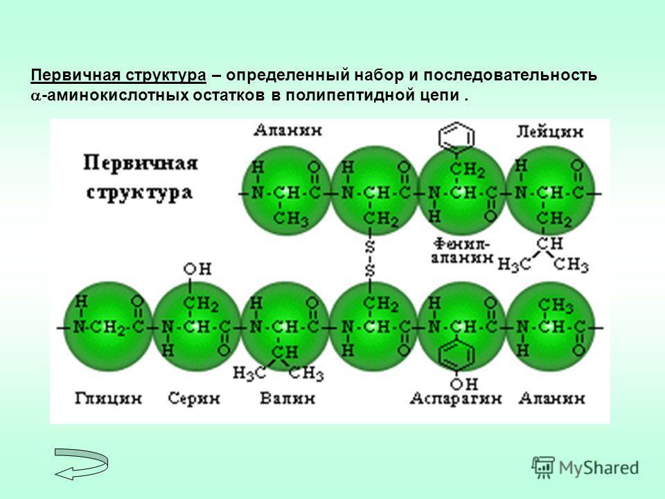 Первичная структура – определенный набор и последовательность -аминокислотных остатков в полипептидной цепи.