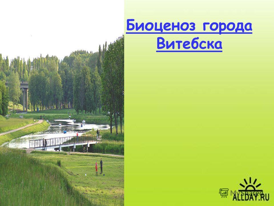 Биоценоз города Витебска