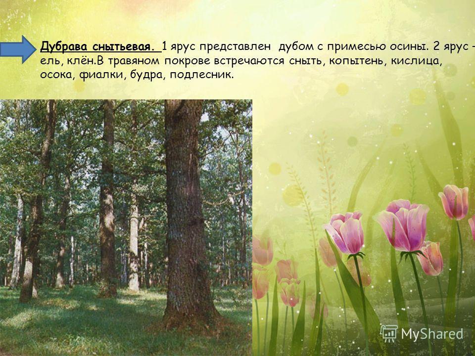 Дубрава снытьевая. 1 ярус представлен дубом с примесью осины. 2 ярус – ель, клён.В травяном покрове встречаются сныть, копытень, кислица, осока, фиалки, будра, подлесник.