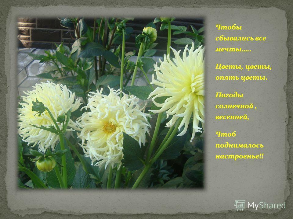Чтобы сбывались все мечты….. Цветы, цветы, опять цветы. Погоды солнечной, весенней, Чтоб поднималось настроенье!!