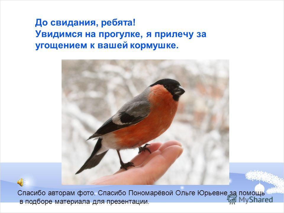 До свидания, ребята! Увидимся на прогулке, я прилечу за угощением к вашей кормушке. Спасибо авторам фото. Спасибо Пономарёвой Ольге Юрьевне за помощь в подборе материала для презентации.