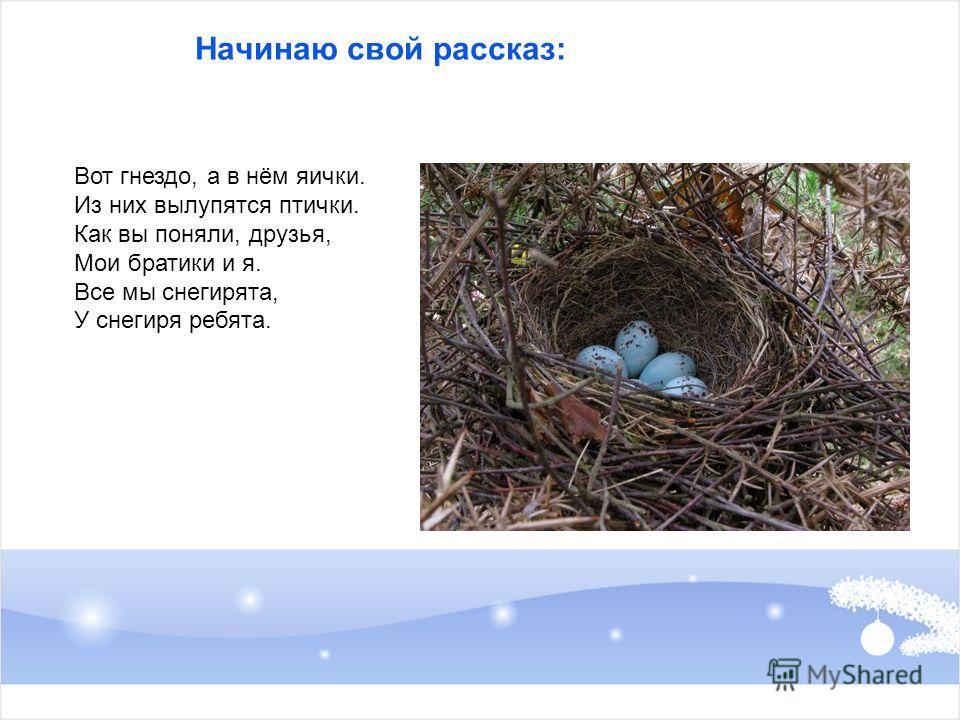 Начинаю свой рассказ: Вот гнездо, а в нём яички. Из них вылупятся птички. Как вы поняли, друзья, Мои братики и я. Все мы снегирята, У снегиря ребята.