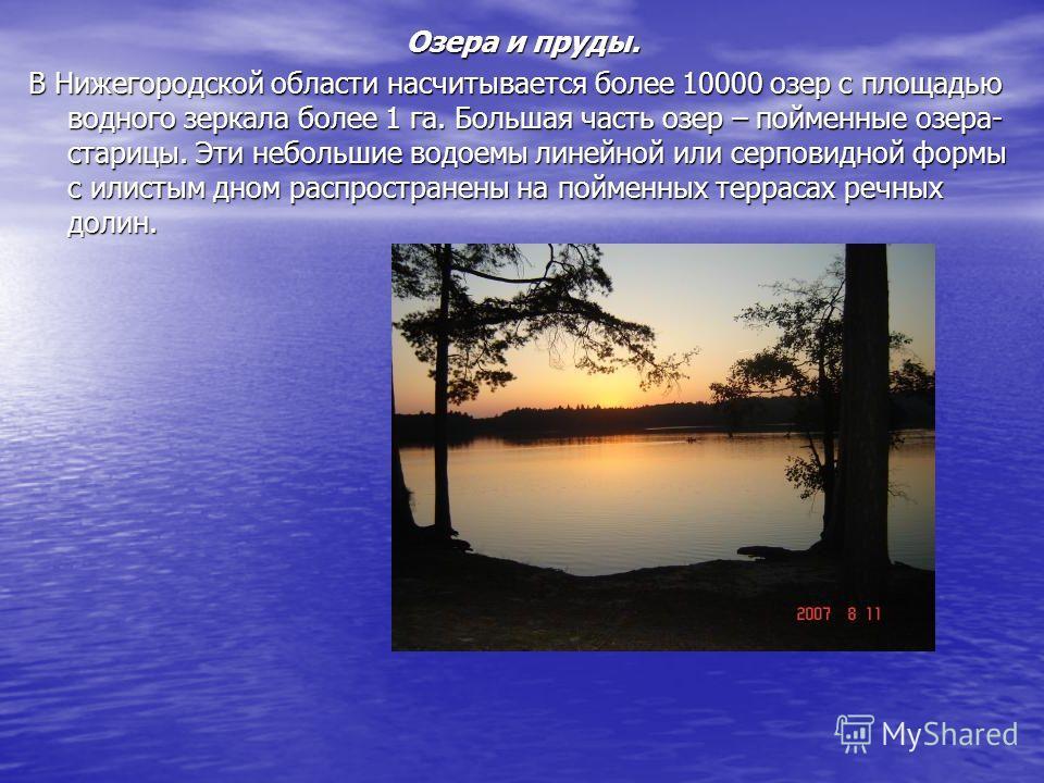 Озера и пруды. В Нижегородской области насчитывается более 10000 озер с площадью водного зеркала более 1 га. Большая часть озер – пойменные озера- старицы. Эти небольшие водоемы линейной или серповидной формы с илистым дном распространены на пойменны