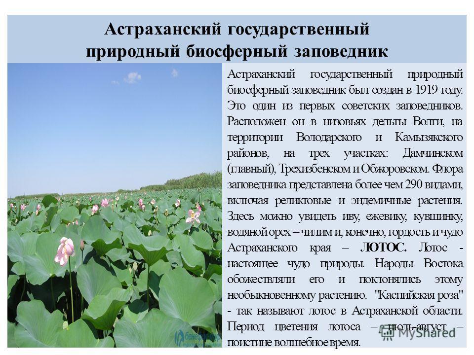 Астраханский государственный природный биосферный заповедник Астраханский государственный природный биосферный заповедник был создан в 1919 году. Это один из первых советских заповедников. Расположен он в низовьях дельты Волги, на территории Володарс
