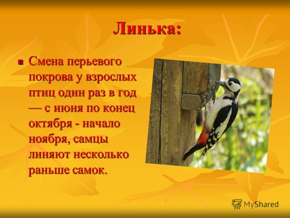 Линька: Линька: Смена перьевого покрова у взрослых птиц один раз в год с июня по конец октября - начало ноября, самцы линяют несколько раньше самок. Смена перьевого покрова у взрослых птиц один раз в год с июня по конец октября - начало ноября, самцы