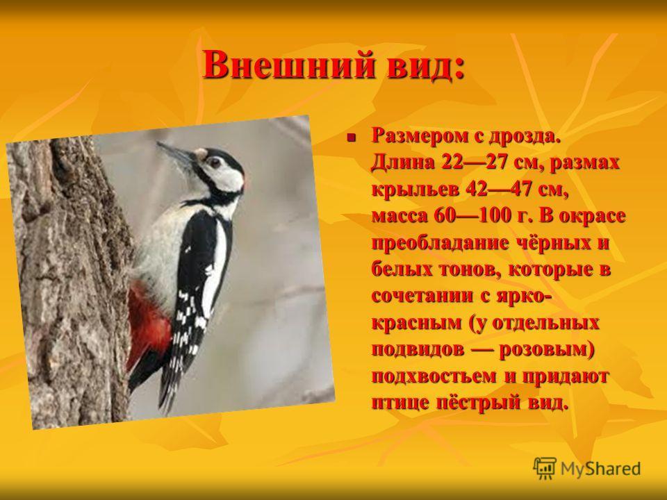 Внешний вид: Размером с дрозда. Длина 2227 см, размах крыльев 4247 см, масса 60100 г. В окрасе преобладание чёрных и белых тонов, которые в сочетании с ярко- красным (у отдельных подвидов розовым) подхвостьем и придают птице пёстрый вид. Размером с д