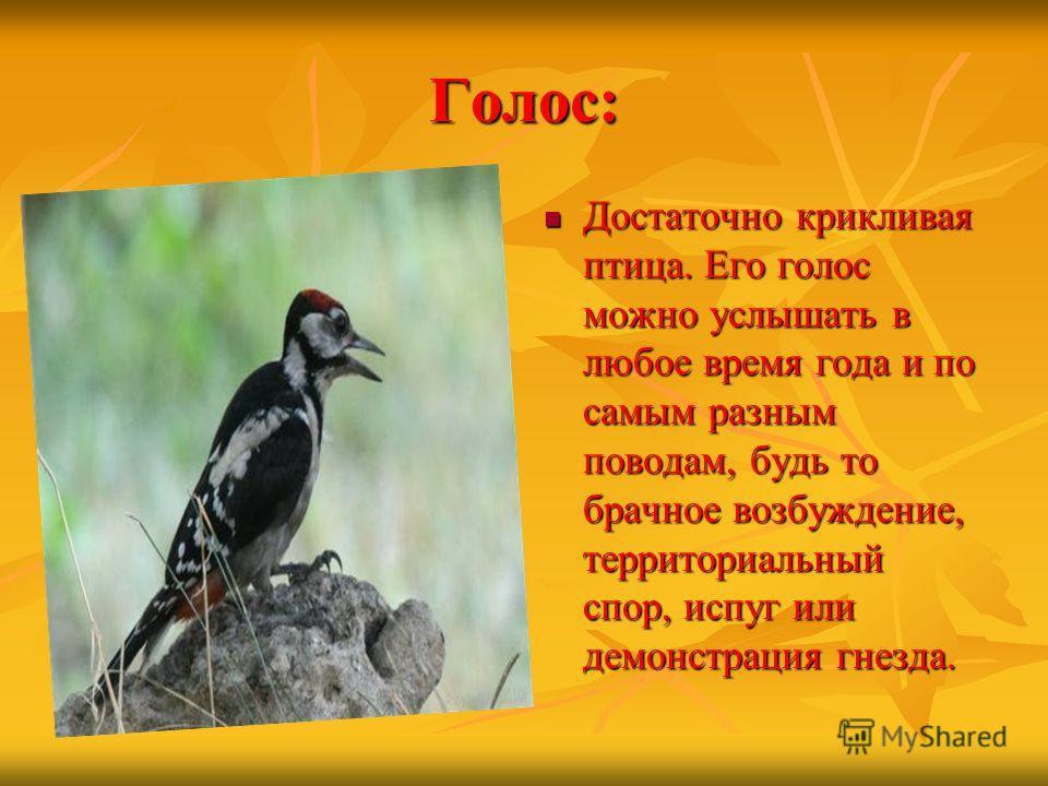 Голос: Достаточно крикливая птица. Его голос можно услышать в любое время года и по самым разным поводам, будь то брачное возбуждение, территориальный спор, испуг или демонстрация гнезда. Достаточно крикливая птица. Его голос можно услышать в любое в