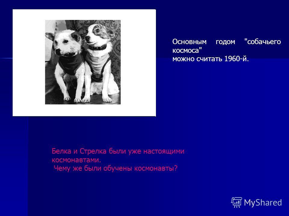 Основным годом собачьего космоса можно считать 1960-й. Белка и Стрелка были уже настоящими космонавтами. Чему же были обучены космонавты?