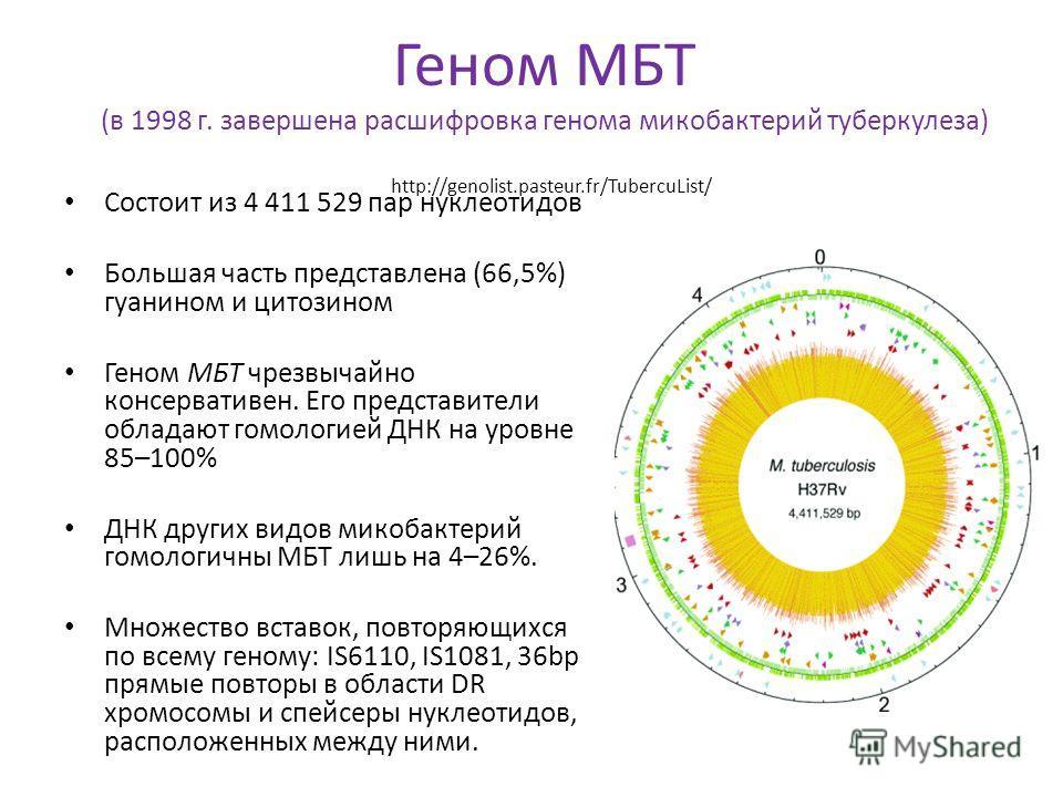 Геном МБТ (в 1998 г. завершена расшифровка генома микобактерий туберкулеза) http://genolist.pasteur.fr/TubercuList/ Состоит из 4 411 529 пар нуклеотидов Большая часть представлена (66,5%) гуанином и цитозином Геном МБТ чрезвычайно консервативен. Его