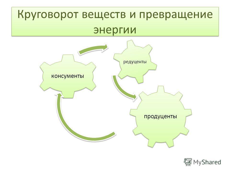 Круговорот веществ и превращение энергии продуценты консументы редуценты