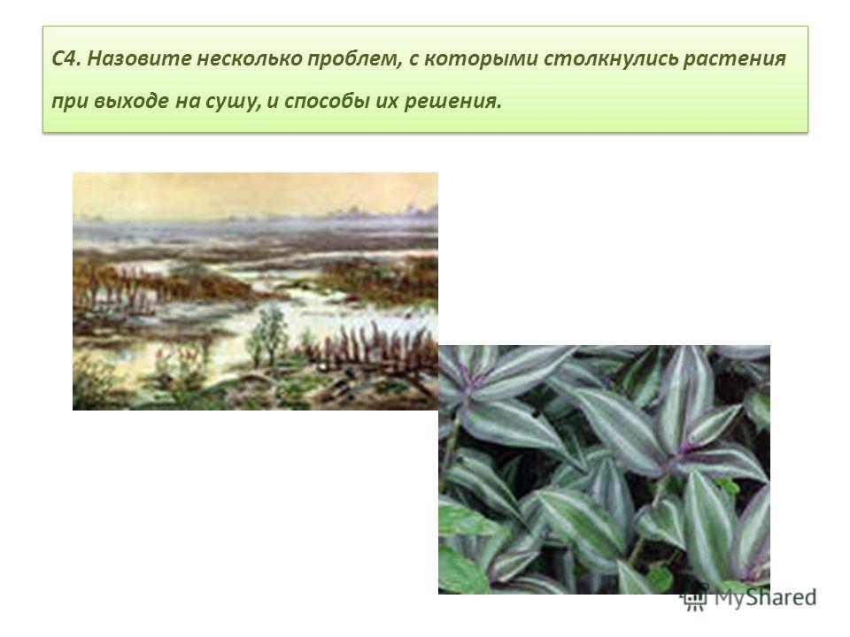 С4. Назовите несколько проблем, с которыми столкнулись растения при выходе на сушу, и способы их решения.