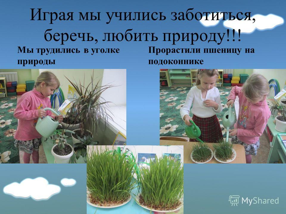 Играя мы учились заботиться, беречь, любить природу!!! Мы трудились в уголке природы Прорастили пшеницу на подоконнике