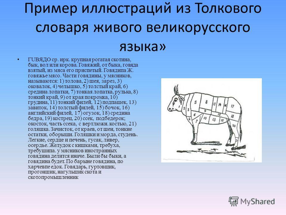 Пример иллюстраций из Толкового словаря живого великорусского языка» ГUВЯДО ср. ирк. крупная рогатая скотина, бык, вол или корова. Говяжий, от быка, говяда взятый, из мяса его приспетый. Говядипа Ж. говяжье мясо. Части говядины, у мясников, называютс