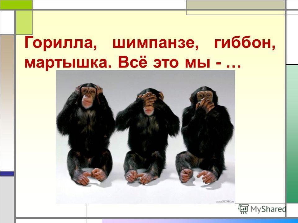 Горилла, шимпанзе, гиббон, мартышка. Всё это мы - …
