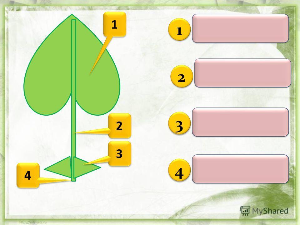 2 2 3 3 4 4 1 1 Лист – орган побега. Он состоит из листовой пластинки, черешка, и основания. У некоторых растений лист имеют еще и прилистники. Лист – орган побега. Он состоит из листовой пластинки, черешка, и основания. У некоторых растений лист име