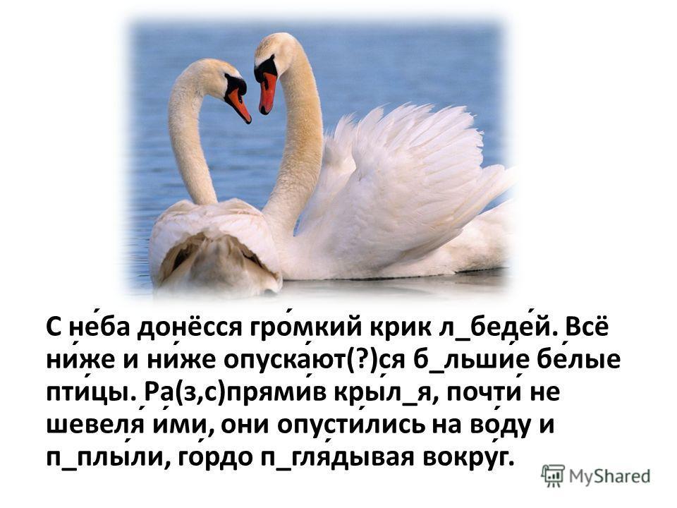 С неба донёсся громкий крик л_бедей. Всё ниже и ниже опускают(?)ся б_льшие белые птицы. Ра(з,с)прямив крыл_я, почти не шевеля ими, они опустились на воду и п_плыли, гордо п_глядывая вокруг.