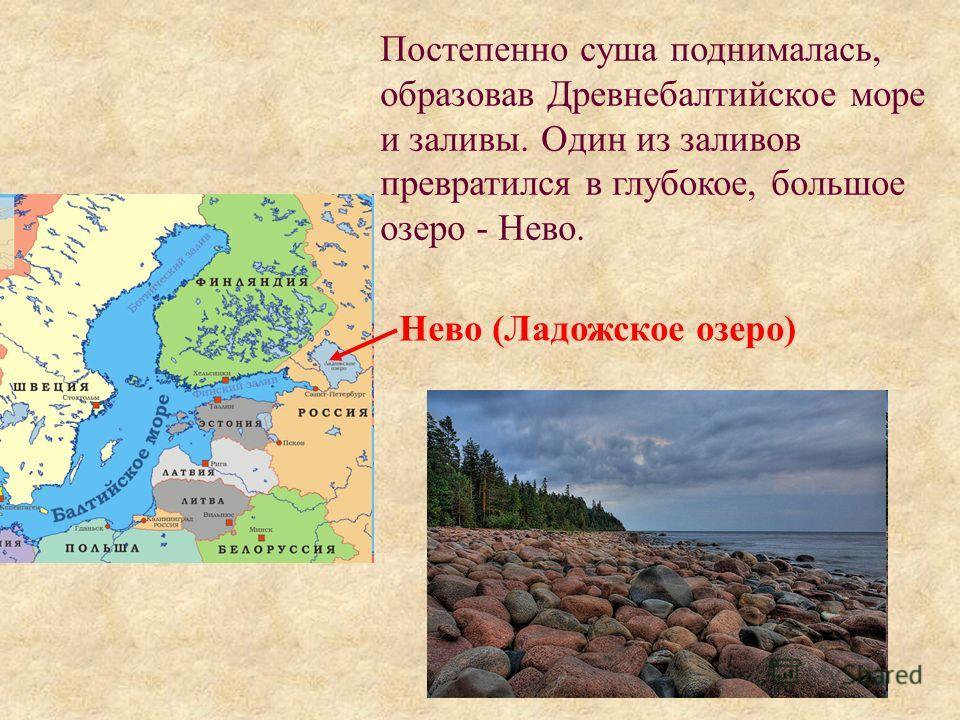 Постепенно суша поднималась, образовав Древнебалтийское море и заливы. Один из заливов превратился в глубокое, большое озеро - Нево. Нево (Ладожское озеро)