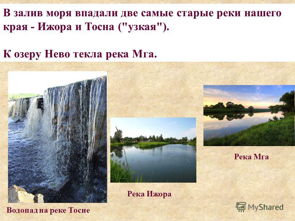 В залив моря впадали две самые старые реки нашего края - Ижора и Тосна (узкая). К озеру Нево текла река Мга. Водопад на реке Тосне Река Мга Река Ижора