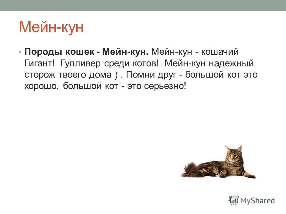 Мейн-кун Породы кошек - Мейн-кун. Мейн-кун - кошачий Гигант! Гулливер среди котов! Мейн-кун надежный сторож твоего дома ). Помни друг - большой кот это хорошо, большой кот - это серьезно!