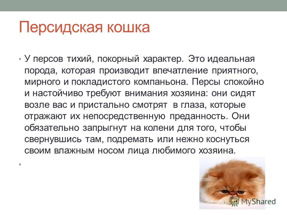 Персидская кошка У персов тихий, покорный характер. Это идеальная порода, которая производит впечатление приятного, мирного и покладистого компаньона. Персы спокойно и настойчиво требуют внимания хозяина: они сидят возле вас и пристально смотрят в гл