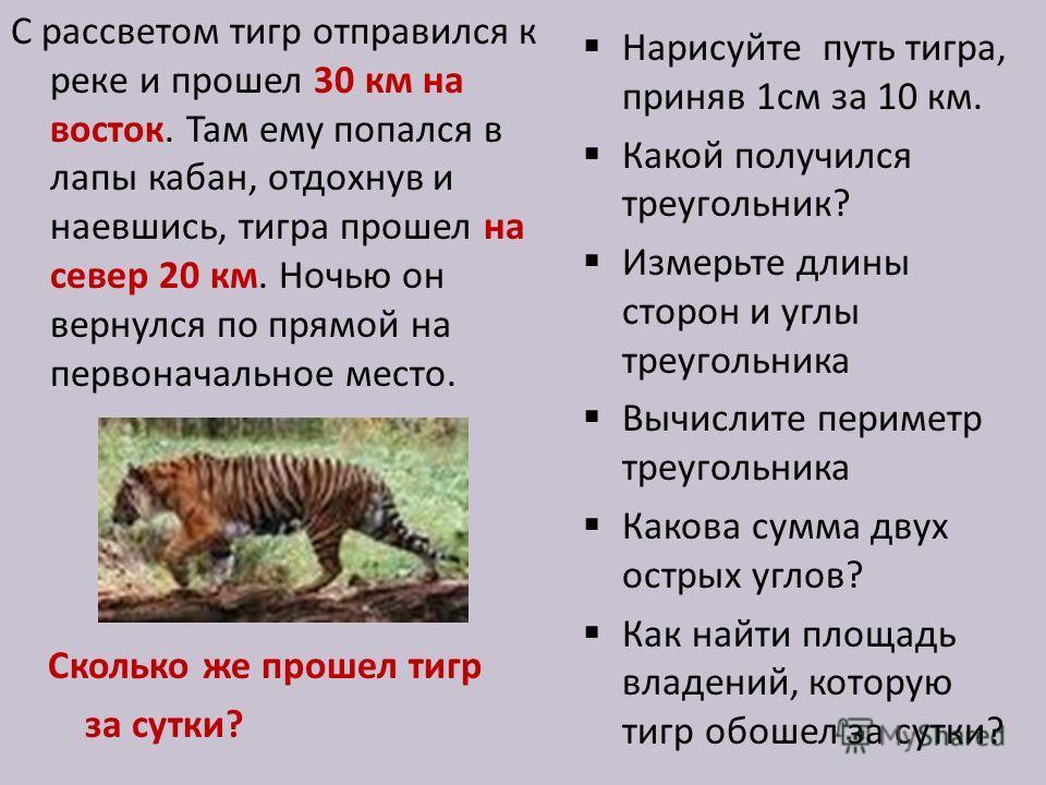 С рассветом тигр отправился к реке и прошел 30 км на восток. Там ему попался в лапы кабан, отдохнув и наевшись, тигра прошел на север 20 км. Ночью он вернулся по прямой на первоначальное место. Сколько же прошел тигр за сутки? Нарисуйте путь тигра, п