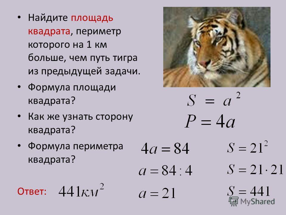 Найдите площадь квадрата, периметр которого на 1 км больше, чем путь тигра из предыдущей задачи. Формула площади квадрата? Как же узнать сторону квадрата? Формула периметра квадрата? Ответ: