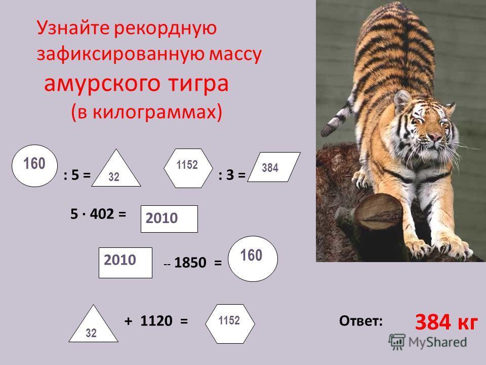 : 5 = : 3 = 5 · 402 = -- 1850 = + 1120 = Ответ: 2010 160 2010 160 32 1152 384 Узнайте рекордную зафиксированную массу амурского тигра (в килограммах) 384 кг