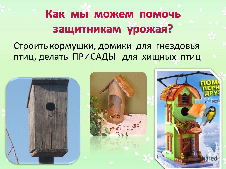 Строить кормушки, домики для гнездовья птиц, делать ПРИСАДЫ для хищных птиц