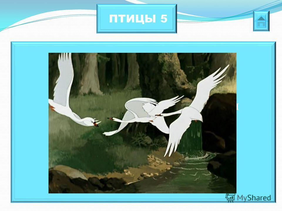 ПТИЦЫ 5 Именно эти сказочные птицы занимались похищением маленьких детей.