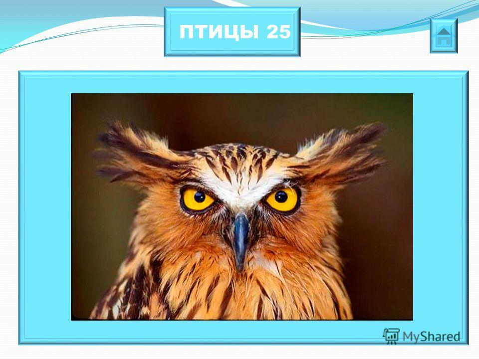ПТИЦЫ 25 У какой птицы поразительная подвижность шеи. Она способна поворачивать голову на 270 градусов.