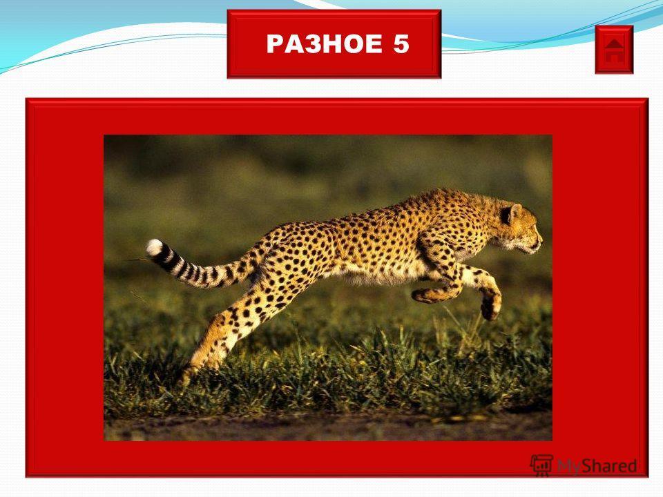 РАЗНОЕ 5 Самое быстрое животное.