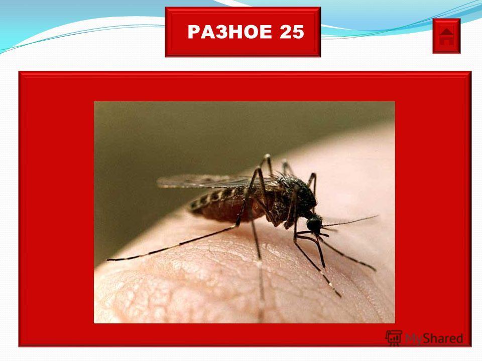РАЗНОЕ 25 Кровососущее насекомое, личинки развиваются в воде, а самки этого насекомого настоящие вампиры