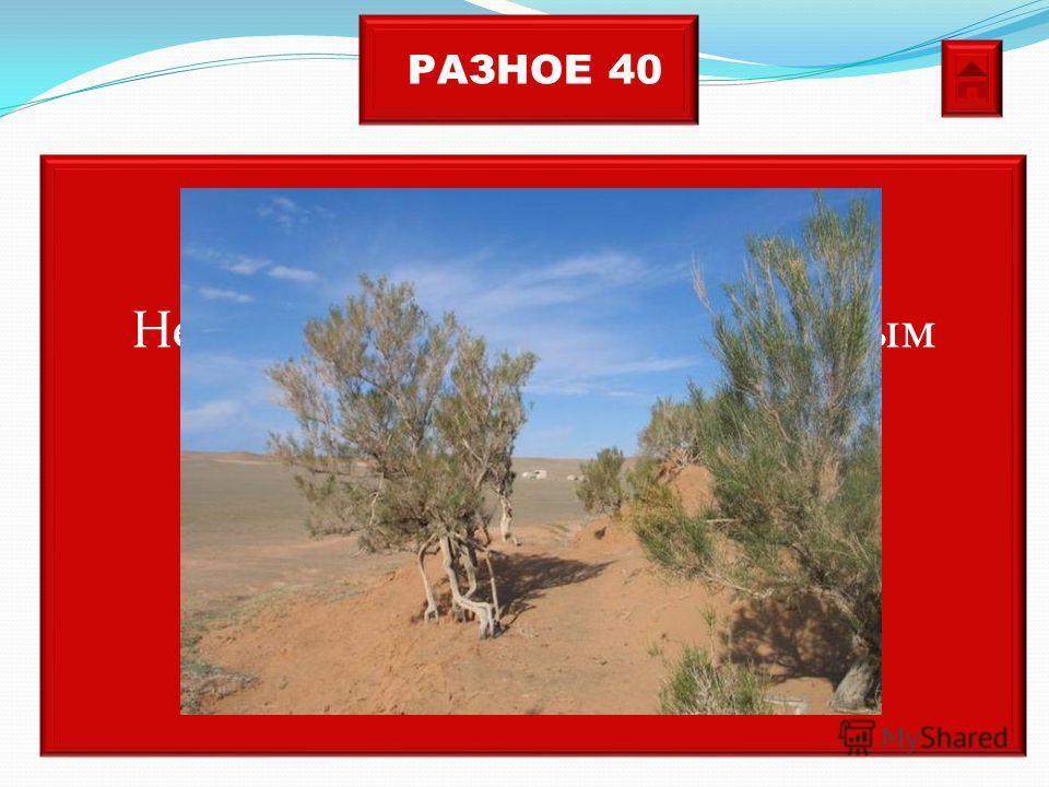 РАЗНОЕ 40 Невысокие деревья с извилистым стволом и шишкообразными наростами растут в пустыне. Если их поливать водой они погибнут