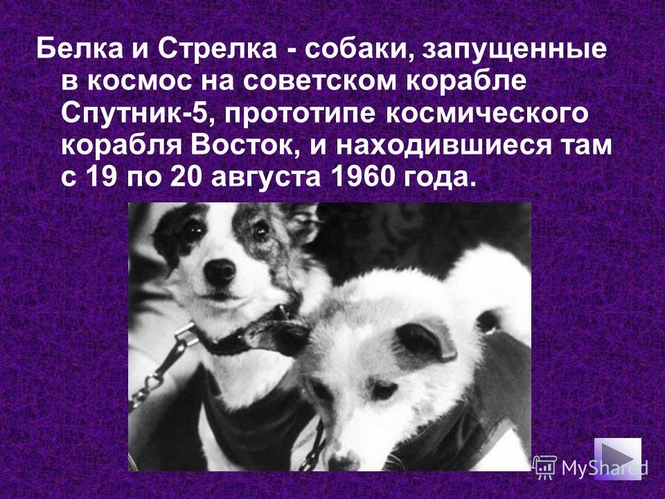 Белка и Стрелка - собаки, запущенные в космос на советском корабле Спутник-5, прототипе космического корабля Восток, и находившиеся там с 19 по 20 августа 1960 года.