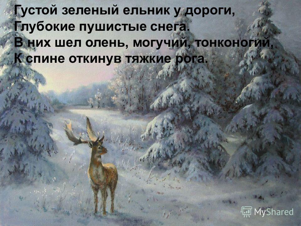 Густой зеленый ельник у дороги, Глубокие пушистые снега. В них шел олень, могучий, тонконогий, К спине откинув тяжкие рога.