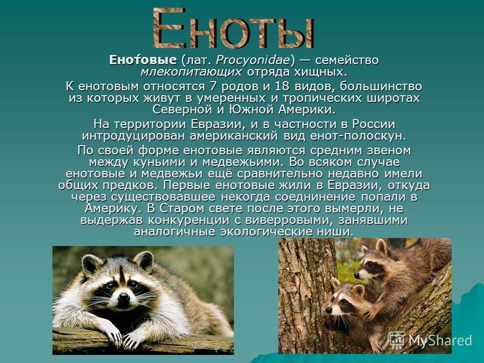 Ено́товые (лат. Procyonidae) семейство млекопитающих отряда хищных. К енотовым относятся 7 родов и 18 видов, большинство из которых живут в умеренных и тропических широтах Северной и Южной Америки. На территории Евразии, и в частности в России интрод