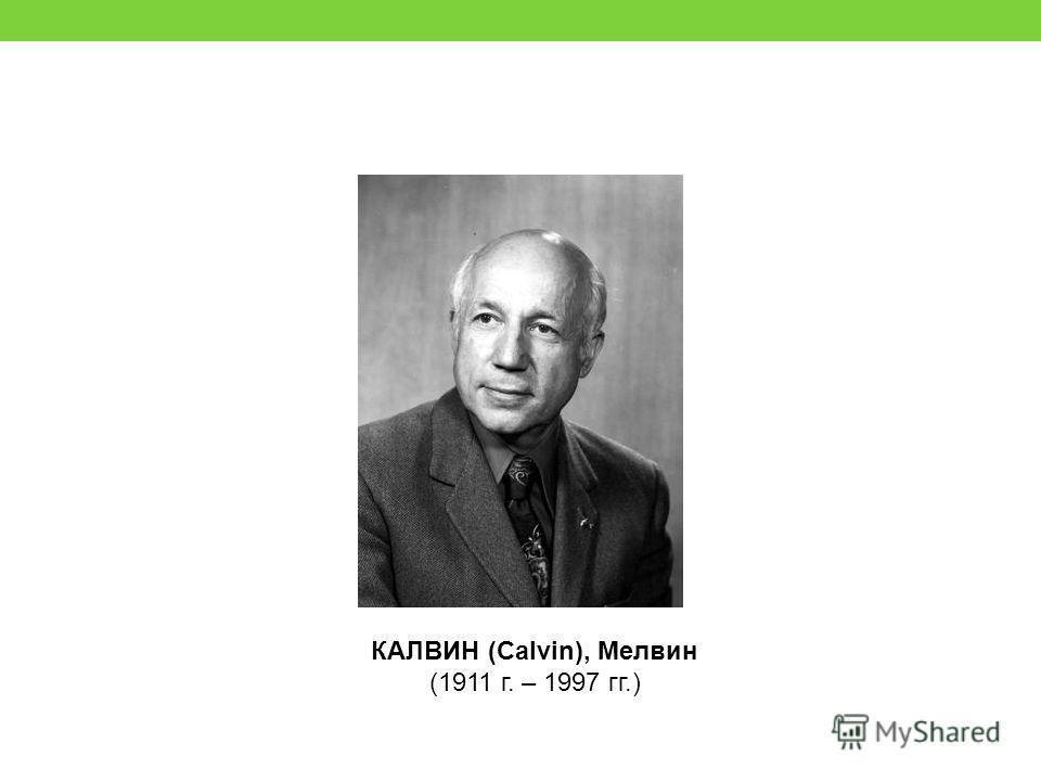 КАЛВИН (Calvin), Meлвин (1911 г. – 1997 гг.)