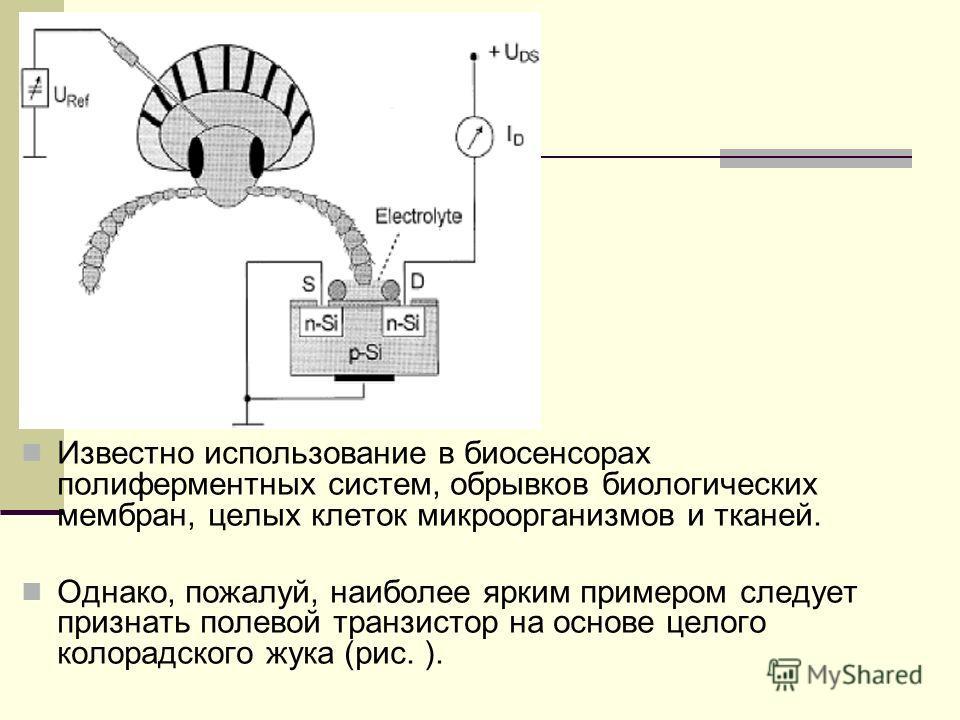 Известно использование в биосенсорах полиферментных систем, обрывков биологических мембран, целых клеток микроорганизмов и тканей. Однако, пожалуй, наиболее ярким примером следует признать полевой транзистор на основе целого колорадского жука (рис. )