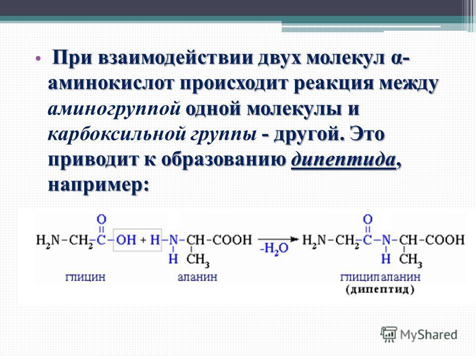 При взаимодействии двух молекул α- аминокислот происходит реакция между одной молекулы и - другой. Это приводит к образованию дипептида, например: При взаимодействии двух молекул α- аминокислот происходит реакция между аминогруппой одной молекулы и к