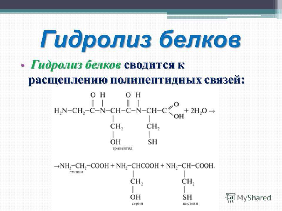 Гидролиз белков Гидролиз белков сводится к расщеплению полипептидных связей: Гидролиз белков сводится к расщеплению полипептидных связей: